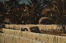 Sisalpflanzung in Deutsch- Ostafrika Die von Dr. Carl Peters erworbene, von den Engländern geraubte deutsche Kolonie ist fast doppelt so groß wie das Deutschland des Jahres 1914. Zu den wichtigsten Plantagenprodukten zählt der Sisalhanf. Er zeichnet sich durch Festigkeit und Geschmeidigkeit aus und bietet vielfache Verwendungsmöglichkeiten.